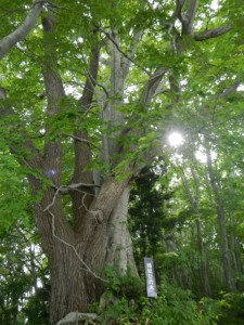 キロポスト19付近縁結びの木