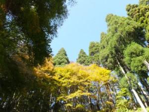 DSCF4346 臼木山