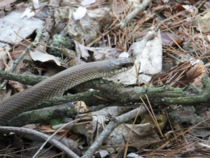 DSCF6763 ヘビ